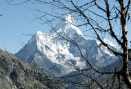 Ama-Dablam-and-birch-a