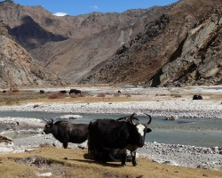 Humla and the Limi Valley Trek